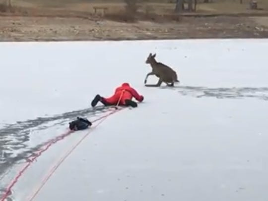Sleepy Hollow Fire Chief John Korzelius rescues a deer