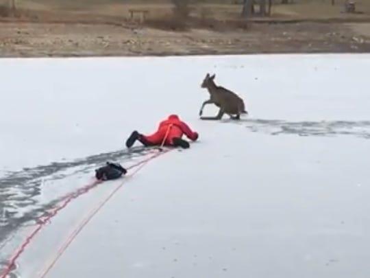 Sleepy Hollow Fire Chief John Korzelius rescues a deer