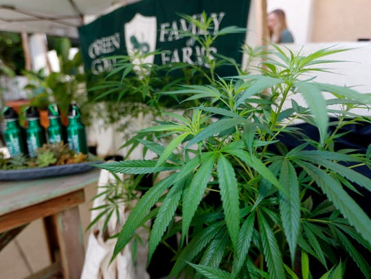 Marijuana plants are displayed at the Green Goat Family