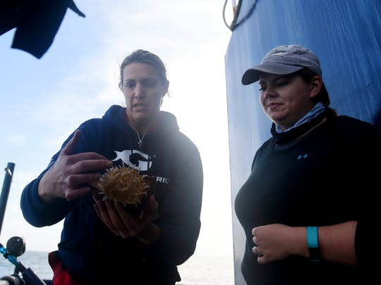 "Lisa Hoopes (left), a nutritionist with the Georgia Aquarium in Atlanta, and Samantha Ehnert, with the University of North Florida, examine a Cannonball jellyfish netted from the water about a mile from Ponce Inlet near Daytona Beach, Tuesday, Jan. 23, 2018. Hoopes and Ehnert are aboard the M/V OCEARCH to take samples of sharks while on an expedition along the coasts of the Carolinas, Georgia and Florida. ""I'm interested in the feeding and nutritional ecology of the sharks we finds,"" said Hoopes. ""By taking samples of sharks in the wild and analyzing those results, we can get a better idea of how to keep the sharks in our collection at the aquarium healthy.""