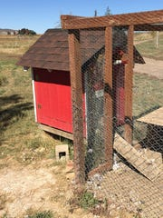 Gregor Mochan said minks got into his chicken coop at his northwest Fort Collins property, killing nine chickens.