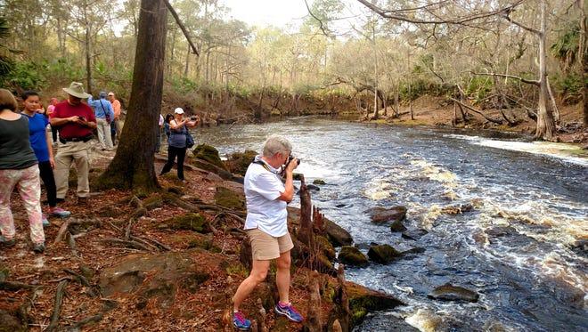 Photos of the Aucilla River Rapids, Florida's second largest.