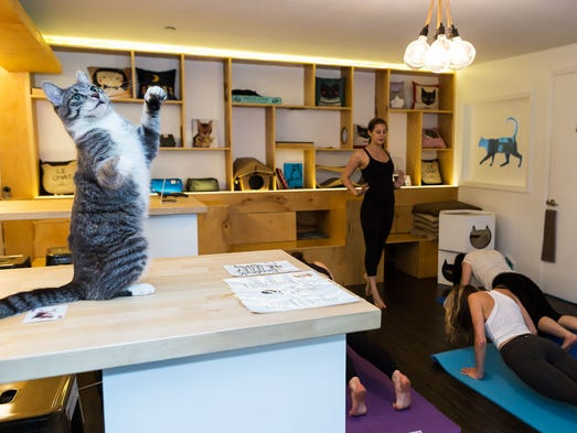 On the global animal cafe scene, cat cafes dominate