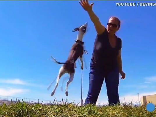 dog go pro camera