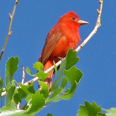 Summer solstice brings bounty for songbirds