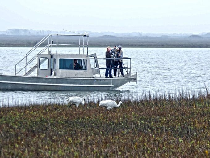 CONTRIBUTED PHOTO   The Jack Flash, piloted by Capt. Kevin Sims can be unobtrusive around the sometimes shy whooping cranes.