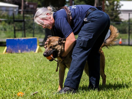 K-9 Baylis gets love from his partner Hailey Cockerham for a toy as they play at the Wilmington Police Department K-9 training course in Wilmington on Monday afternoon.