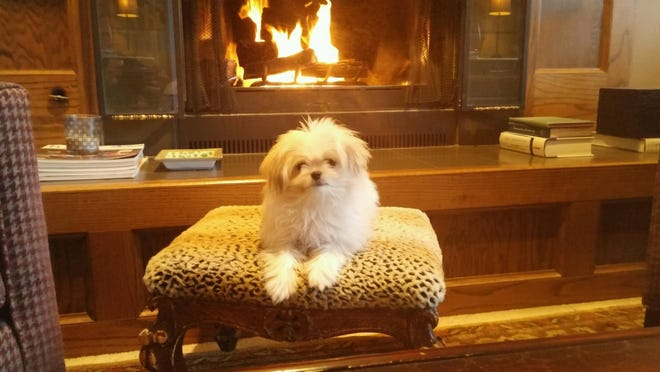 A pup warms up by the fireplace.