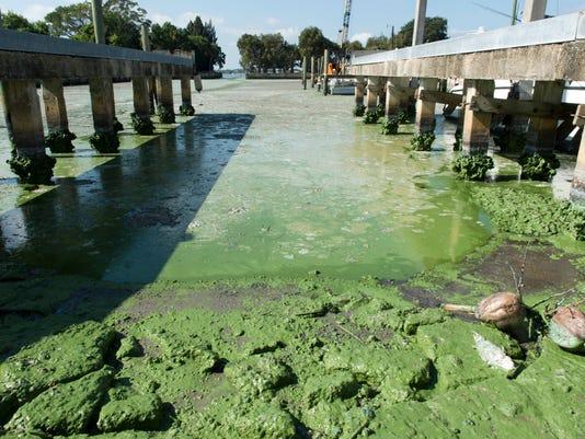636139860380884247-0802-tclo-tcpalm-trending-algae.JPG