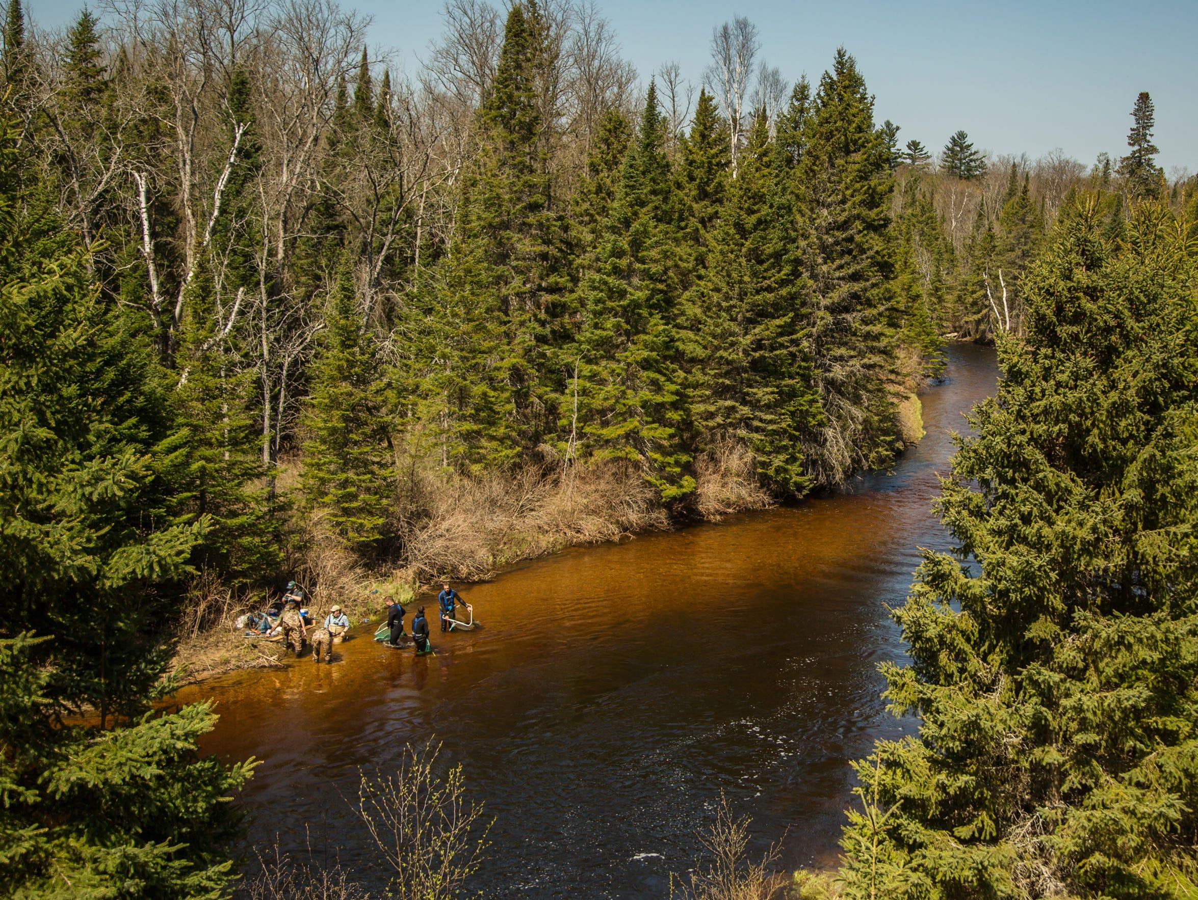 During sturgeon spawning season, researchers from Michigan