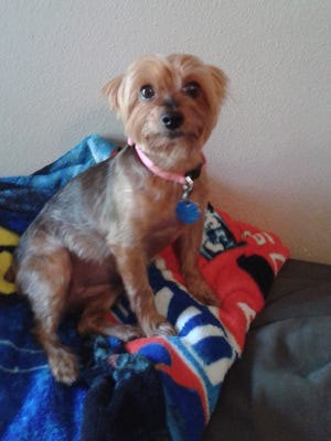 "A Texas woman suffered ""broken-heart syndrome"" following the death of her Yorkshire terrier, Meha."
