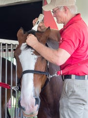 Burton Westbrook has been grooming the Budweiser Clydesdales for 37 years.