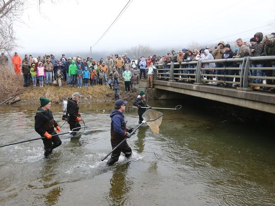 A crowd gathers as Ashleigh Read, a fish and wildlife technician with he DEC, uses a wand with an electric current to stun trout in Naples Creeks. DEC biologists collect data from the trout annually before the opening of trout season on April 1.
