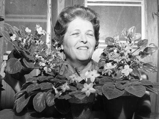 Mrs. Henry C. Mills in 1966 with her African violets