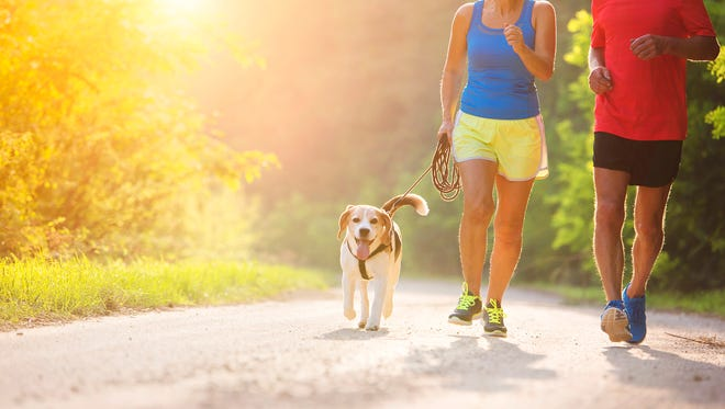 Active seniors running with their dog outside in green nature.
