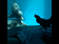 Dolphins interact with a chicken during a stimulation