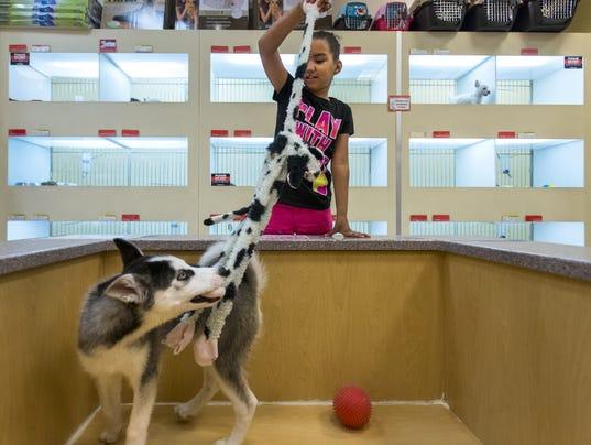 tempe bans 39 puppy mill 39 sales at pet stores. Black Bedroom Furniture Sets. Home Design Ideas