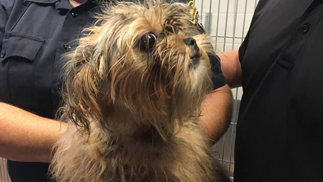 Someone left this little pup wrapped in a black plastic bag outside of the Woodhaven / Trenton Shelter on Sunday.