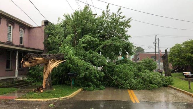 The city of Alliance will use some of its Community Development Block Grant funding to help remove trees in danger of falling and damaging structures or onto roadways.