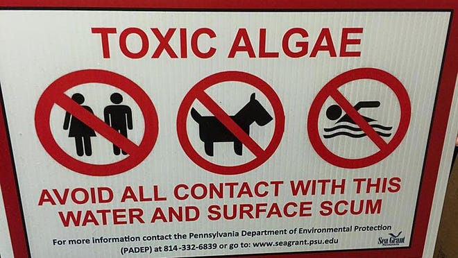 Presque Isle State Park officials place signs at locations of harmful algae blooms in Presque Isle Bay.