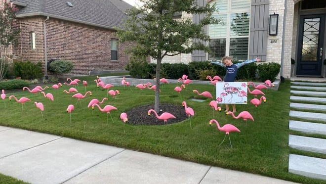 """A child poses for a photo in the front yard of a home that was """"flocked"""" with plastic flamingos, which the organization FACTS of Windsong does to raise funds for its projects. It is currently working to remove the mulch at a Prosper neighborhood playground and replace it with rubber surfacing."""