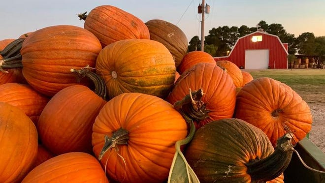 Assister Punkin Ranch is preparing for Floydada's annual Punkin' Days celebration, being held on October 10.