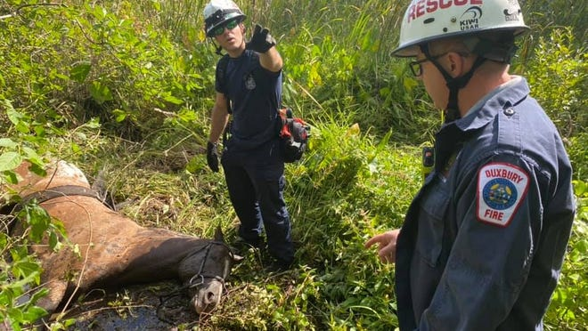 Multiple fire and rescue agencies helped rescue a horse that was stuck in the mud in the Burrage Pond area, Sept. 1, 2020.
