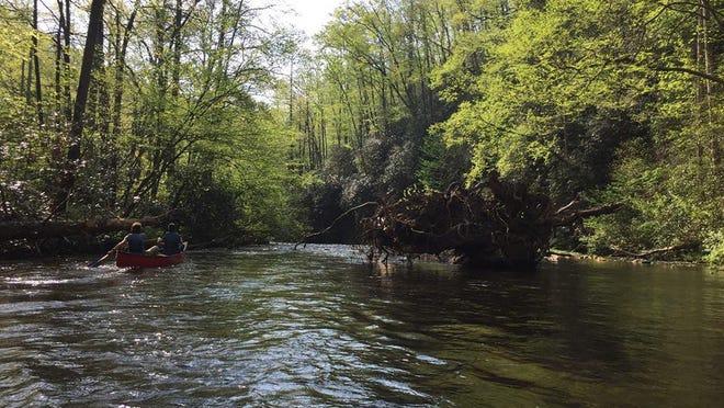 Davidson River in Transylvania County.