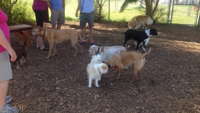 Pooches spend time at the Cathedral City dog park on Buddy Rogers Avenue.