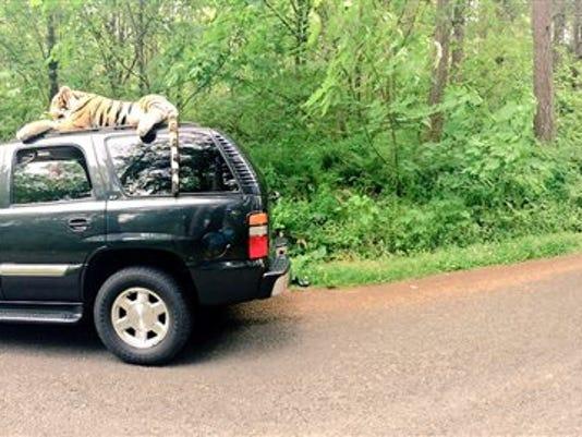 Cruising Tiger 911