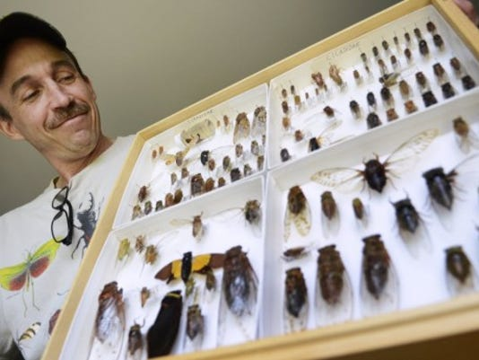 Ryan Bridge -- 'The Bugman' -- holds his collection of cicadas in April. Bridge, who does educational bug programs, has bugs from around the world. (DAILY RECORD/SUNDAY NEWS -- KATE PENN)