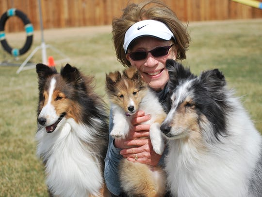 Teri Geer of Reno poses with her shetland sheepdogs, from left, Enzo, 7; Nugget, 12 weeks; and Piper, 11. Enzo and Piper will be competing in this weekend's AKC Agility National Championships at the Reno Livestock Events Center. Guy Clifton/RGJ