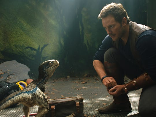 Velociraptor Blue connects with Owen (Chris Pratt)