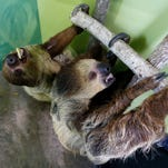 Sloths, giraffes and more at Branson's Promised Land Zoo expansion