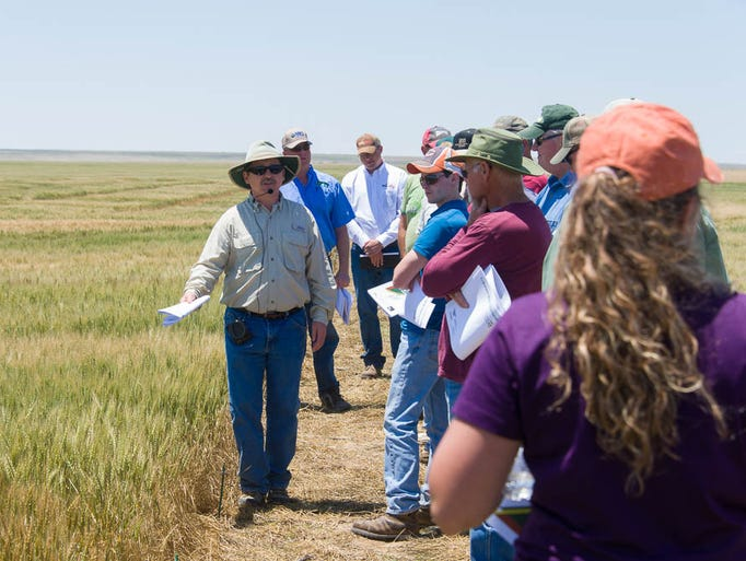 Colorado State University Soil and Crop Sciences professor and wheat breeder Scott Haley describes wheat varieties and experimental lines in a research plot on Burl Scherler's Farm in Brandon, Colorado, during the 2014 Wheat Field Days, June 12, 2014.