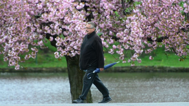 A man walks past Cherry Blossoms with his umbrella prepared for the rain in the Third Ward Memorial Park Tuesday morning April 25, 2017.