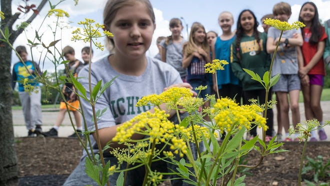 Hoover Elementary fourth-grader Alayna Crosby with three golden Alexanders.
