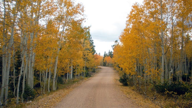 Fall colors in the Kaibab National Forest.