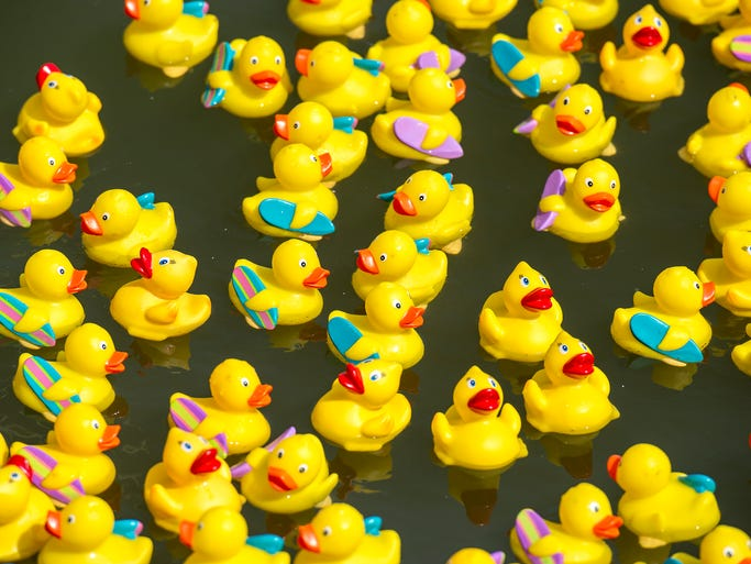 """Rubber ducks are added to a holding pen before being released for Believe in Tomorrow's 2nd Annual Duck Derby to raise money for Believe in Tomorrow Children's Foundation. More than 4,000 ducks were """"adopted"""" to race beside the Seacrets pier, with cash prizes for the top finishers."""