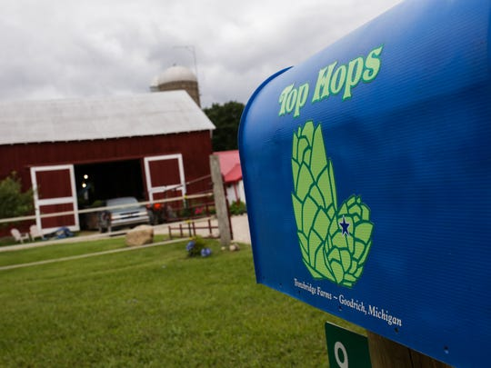 Top Hops Farm in Goodrich on Tuesday August 25, 2015.