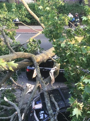 A tree lands on cars along Bellevue Avenue on Wednesday evening, May 17.