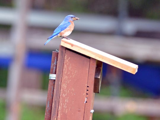 Blue bird boxes were laying on the ground in the state