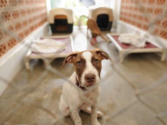Canine influenza