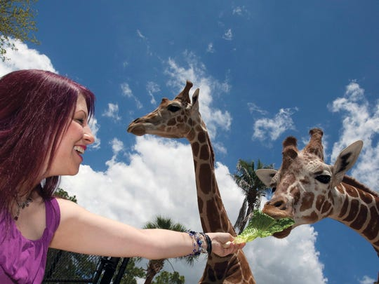 World Giraffe Day at the Naples Zoo will raise funds for giraffe conservation.