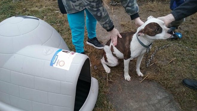 Two community members are providing warm spaces for local outdoor animals during the extreme cold temperatures.