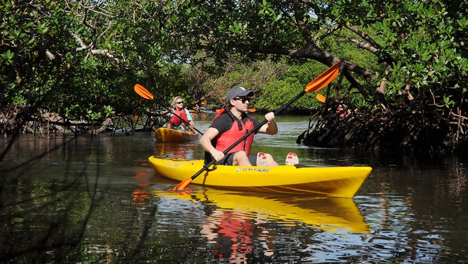Kayakers take a guided tour in Rookery Bay Reserve. Southwest Florida offers numerous kayaking opportunities.