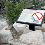 At the Grand Canyon, squirrel selfies can be dangerous to your health