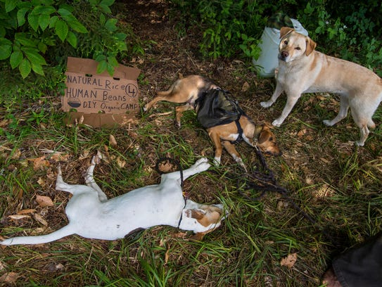 A group of dogs lounges near a camp at the Rainbow