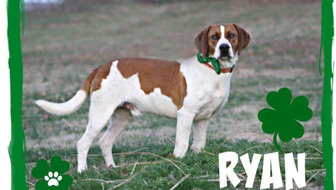 Ryan is such a handsome, well behaved boy. We can't believe he hasn't been adopted yet. He's smart too, graduating from WKCC's L.E.A.S.H program in basic obedience. Come check this guy out. He's waiting for you at Mary Hall Ruddiman.