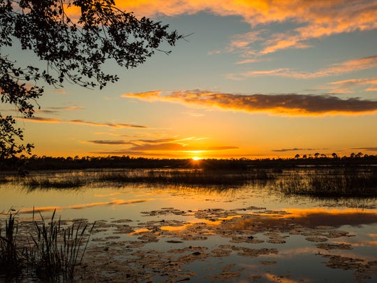 The Guided Park Excursion at Hawk's Bluff Trail is Sunday at Savannas Preserve State Park in Port St. Lucie.